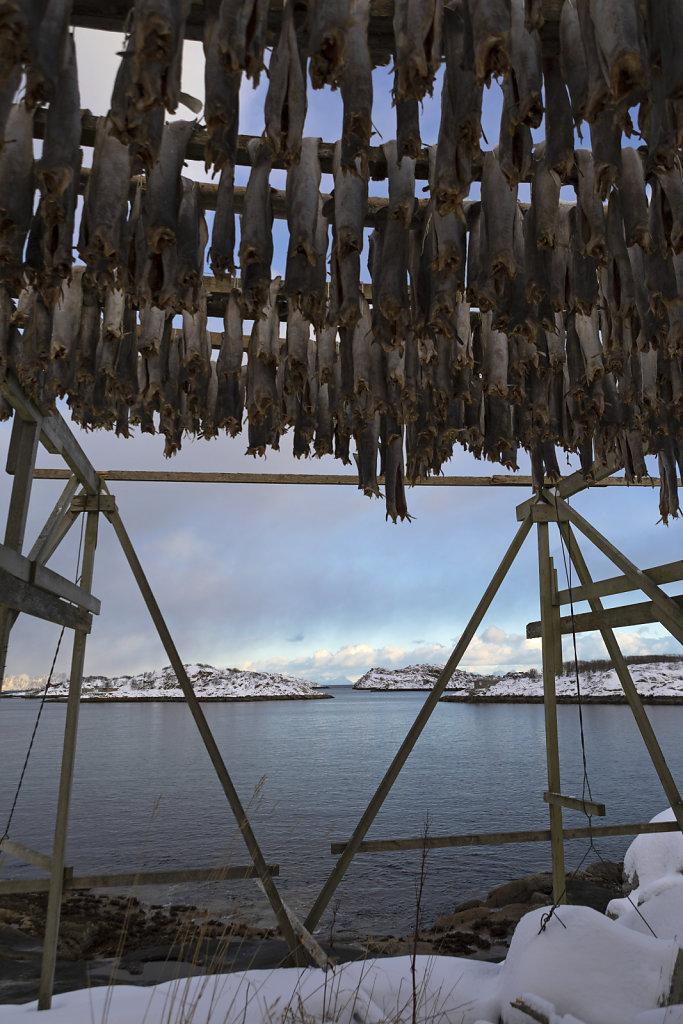 Abhängen mit Aussicht - Stockfisch in Henningsvaer/Lofoten